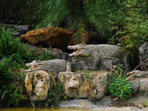 Gatorland Orlando