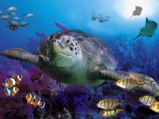 Merlin's Magical London Pass SEA Life