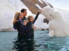Interação com Baleia Beluga