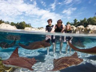 Discovery Cove® Orlando Sem Nado