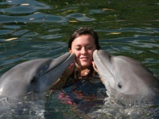 Nado com golfinho em Key Largo