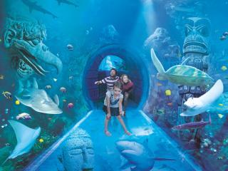 SEA LIFE Orlando Experience Orlando's only 360-degree underwater tunnel