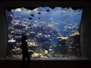 California Academy of Sciences - Behind-the-Scenes Aquarium Tour