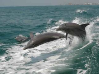 1 dia em Clearwater Beach & Vista de Golfinhos