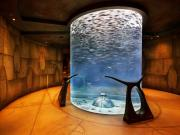 The Lost Chambers no Atlantis The Palm