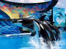 Combo Universal & SeaWorld