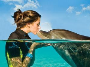 Nado com Golfinhos em Águas Rasas em Dubai
