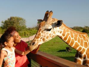 Serengeti Safari no Parque Busch Gardens